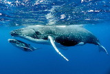 whale