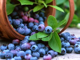 ~Blueberries! Blueberries!~