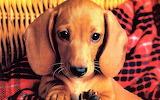 #Big Eyed Puppy