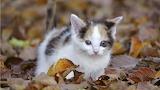 Kittens wallpaper 1366x768