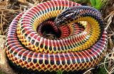 Rainbow-Snake-2