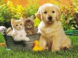 Cani e gatti-Giocando in giardino