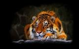 Tiger's Lazy Dayz