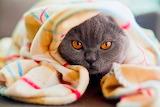 Cat-Snuggled