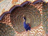 Peacock Jaipur 1