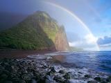 Starring the Rainbow
