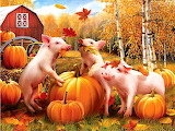 Pigs in fall