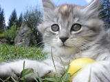 Pretty Kitty @ free images.com...