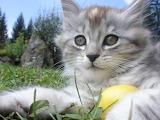 Pretty Kitty @ free images.com...