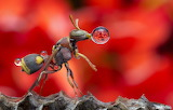 A Wasp And Waterdrops