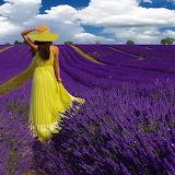 ☺♥ Lavender field...
