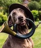 Dog with bugle