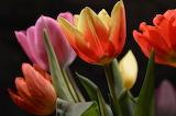 Flowers @ pexels.com...