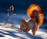 in the rays of the winter sun