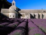Lavender-Fields Provence France