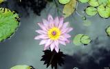 00384_water flower920x1200