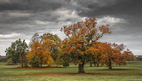 Full Autumn Colours, Cannon Hall by Mark Slater