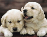 ☺ Sweet puppies...