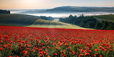 Houghton Field, West Sussex by Marie Davey