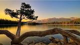 Lake-tree