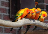 Colorful gathering