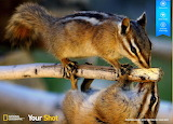 Pair of Colorado Rocky Mountain chipmunks by auricle 99 from mag