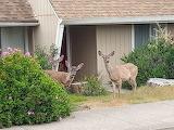 Oh deer me!