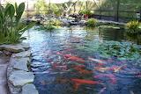 Pond 006