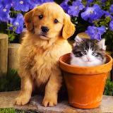 Kitten & Puppy...