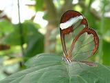 Butterfly clear
