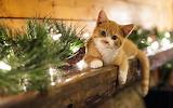 Kitten Helping Decorate