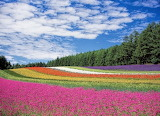 Fields of Colour