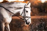 ❤️White Horse...