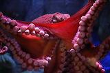 Animals Cephalopod 2