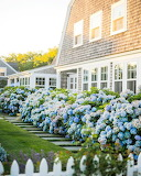 Cottage Hydrangia Nantucket