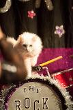 My Drums!