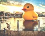 Florentijn Hofman: Rubber Duck (2007)