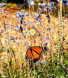 Puzzle flowers and butterflies