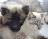 """/POTW/ """"Cats and dogs""""-Friends."""