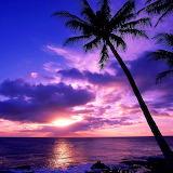 TAHITIAN PARADISE