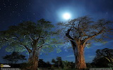2 TREES IN THE MOONLIGHT