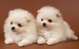 Cutest Baby Dog