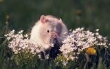 ☺ Little mouse...
