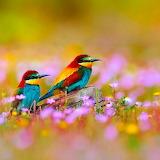 * Bee Eaters in a Field of Flowers...