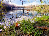 Spring Flowers by DM Guthery
