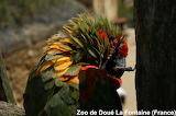 Parrot / Perroquet
