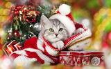 Weihnachtsmieze