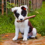 :-D Cute Puppy...