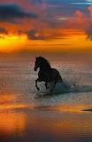 Horse evening run