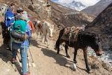 Himalayan horses
